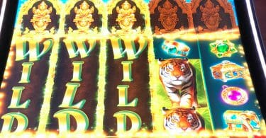 Golden Jungle Grand by IGT big win three wilds