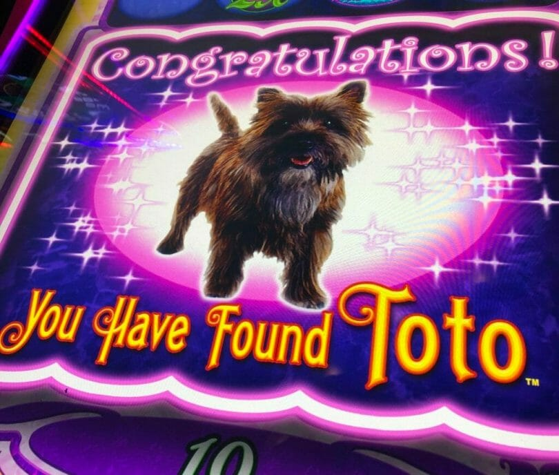 Munchkinland by Scientific Games you have found Toto