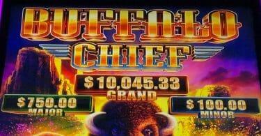 Buffalo Chief by Aristocrat progressives